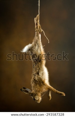Dead hare hanging on a rope in an old master hunting still life - stock photo