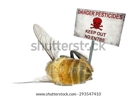 Dead honey bee and the danger warning poster (Danger pesticides) isolated on the white background - stock photo