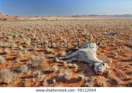 Dead horse in the desert of Namibia - stock photo