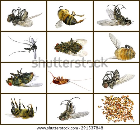 Dead insects (fly, bee, cockroach and ants). Macro. Isolated on a white background - stock photo