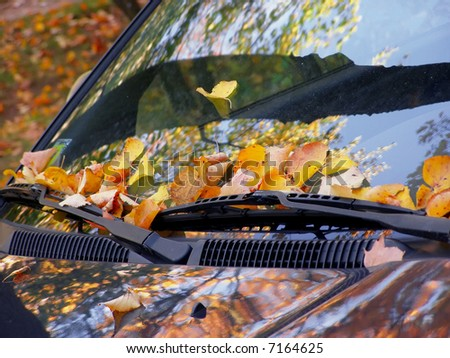 dead leaves on the windshield
