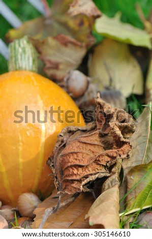dead leaves, squash and chestnuts on the ground - stock photo