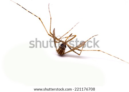 Dead Mosquito - stock photo