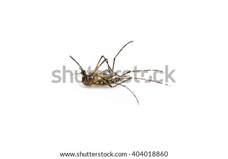 Dead mosquito on white background. - stock photo