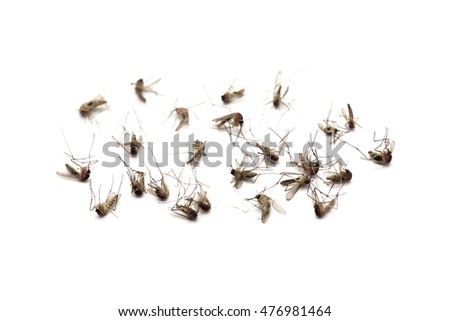 Dead mosquitoes on white background, Dangerous vehicle of zika virus, dengue virus, chikungunya, malaria and other infections.