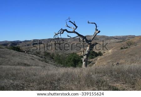 Dead oak tree in rolling hills, San Fernando Valley, CA - stock photo