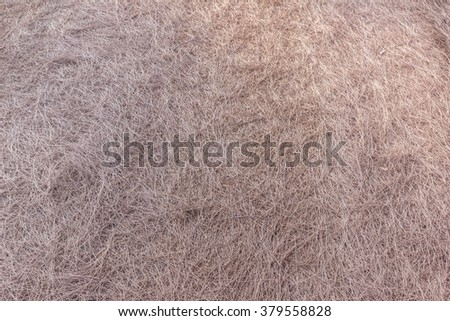 Dead pine needles on ground can be used as background - stock photo