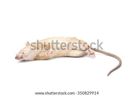Dead rat and mouse Isolated on White Background
