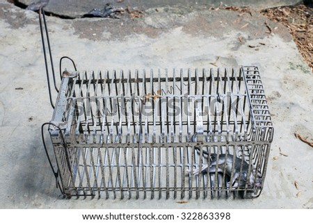 Dead rat in a cage - stock photo