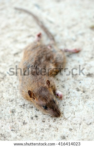 Dead rats on the floor