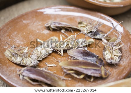 Dead roaches on clay plate, animals - stock photo