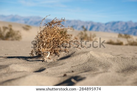 Dead sagebrush lies on sand in desert wilderness of American southwest. - stock photo