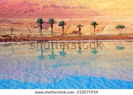 Dead sea shore, Israel - stock photo