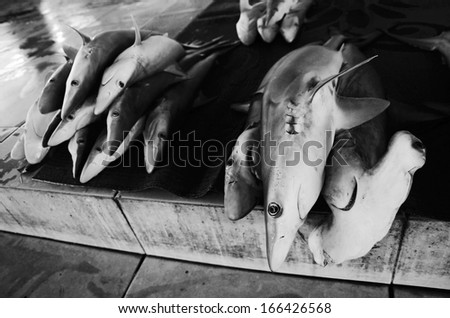 Dead sharks on the fish market, Dramatic close up shot in black and white - stock photo