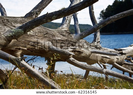 dead snag by the side of a lake - stock photo