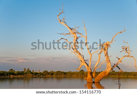 dead standing tree illuminated by the evening sun on the lake manze in africa - national park selous game reserve in tanzania - stock photo