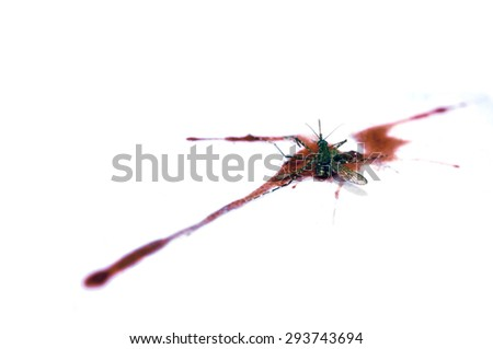 Dead the mosquito on The distribution of human blood. isolated - stock photo