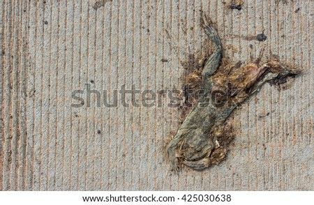 Dead toad or frog is crushed to death by car on the road - stock photo