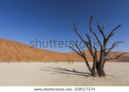 dead tree  and a red sand dune in the Namib desert, Dead Vlei, Namib Naukluft Park, Namibia, Africa  - stock photo