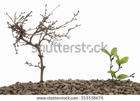 dead tree and growth tree isolated background