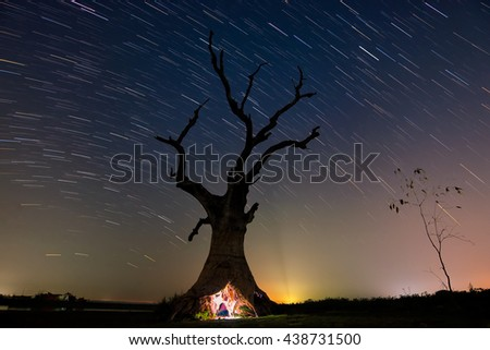 Dead tree and star tail - stock photo