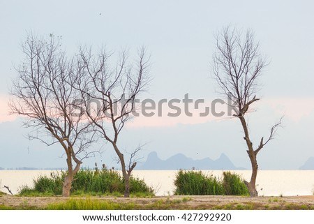dead tree at lake  - stock photo