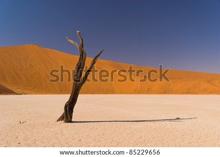 Dead tree at Sossusvlei with shadow and sand dunes - stock photo
