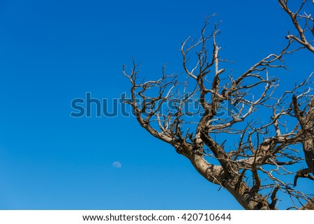 Dead tree branch from the famous Enchanted Forest place in Ochi mountain, against a blue sky and moon in Greece - stock photo