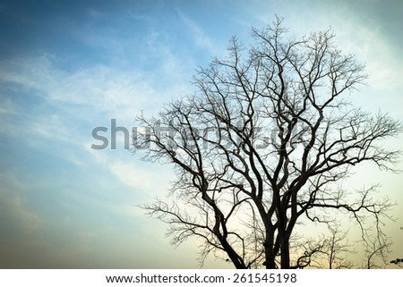 Dead tree branches on blue sky - stock photo