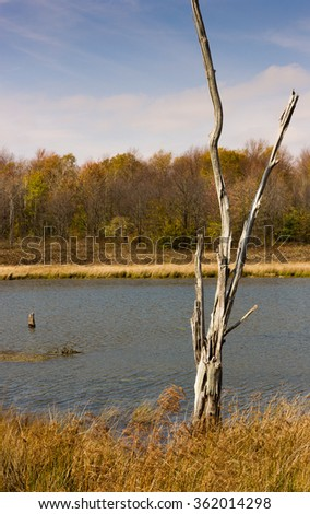Dead Tree By The Lake. - stock photo