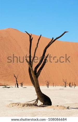 Dead tree, Dead Vlei, Namibia - stock photo