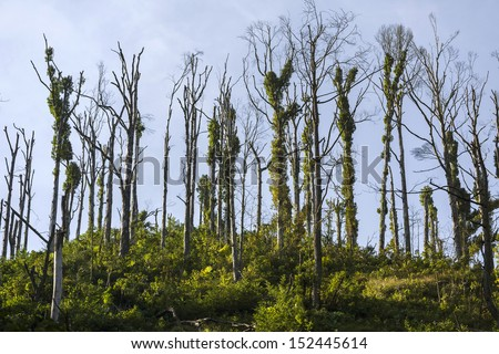 Dead tree effect of environmental pollution - stock photo