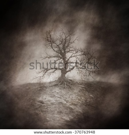 Dead tree in a bleak, lonely, windswept landscape captured using long exposure, bokeh and other effects with some areas blurred to create a surreal and dreamlike effect