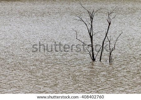 Dead tree in a lake with ripples on the water
