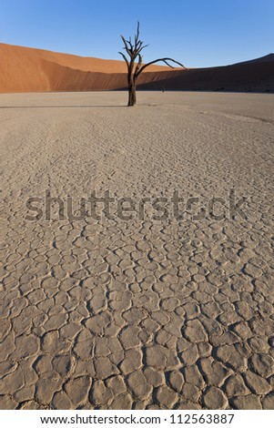 Dead tree in cracked earth of dried clay pan surrounded by desert in Namib Naukluft National Park, Namibia, Africa