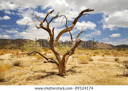 Dead tree in desert - stock photo