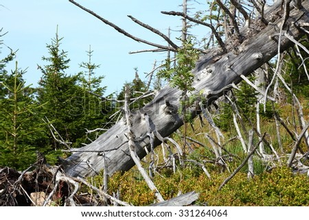 dead tree in forest destroyed by acid rain