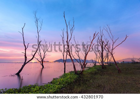 dead tree in lake at sunset - stock photo
