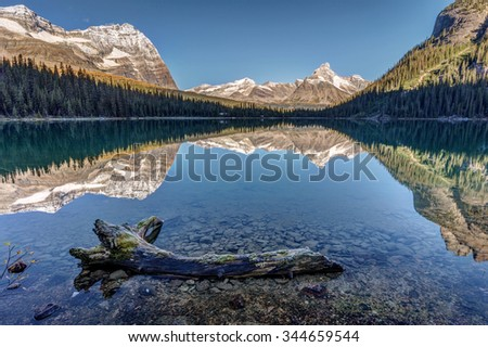 Dead tree in the calm water of Lake O'Hara with reflection of the surrounding mountains at sunrise in Yoho National Park, British Columbia, Canada. - stock photo