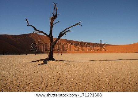 Dead Tree in the desert of Sossusvlei