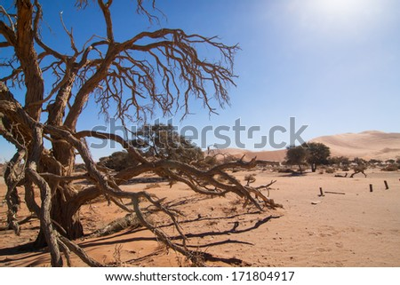 dead tree in the lonesome, dry namibian desert, Naukluft Park, Namibia, Africa