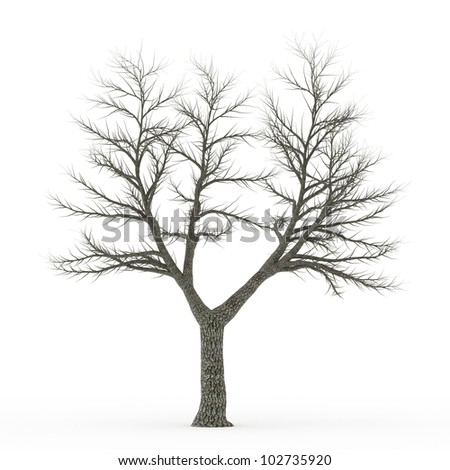 Dead tree isolated on white - stock photo