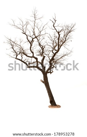 Dead tree isolated with white background - stock photo