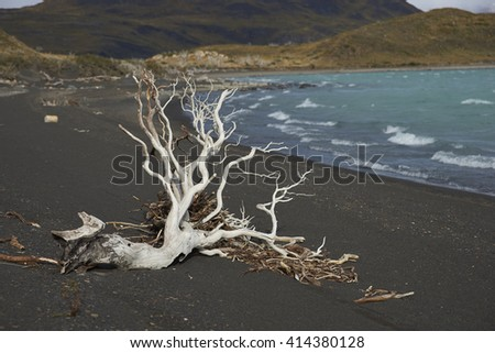 Dead tree on a beach of Lago Nordenskjold in the wilderness of Torres del Paine National Park in the Magallanes region of Chile. - stock photo