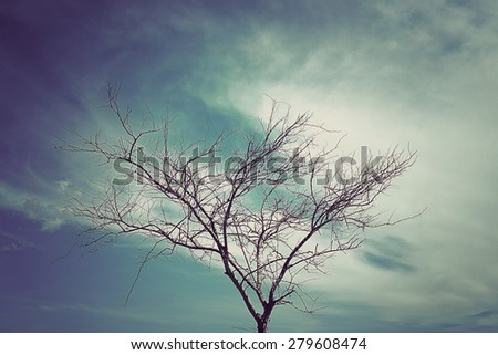 Dead tree on blue sky background with vintage tone - stock photo