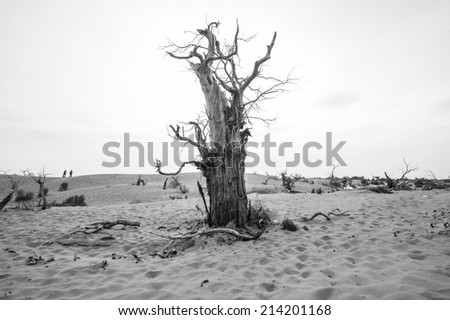 Dead tree on sand dune black and white - stock photo