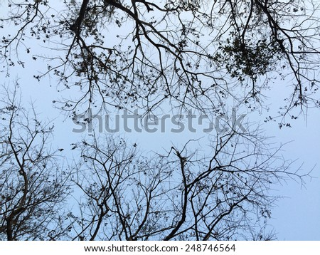 Dead tree on winter time - stock photo