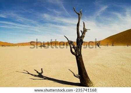 Dead Tree - Sossusvlei - Namibia - stock photo