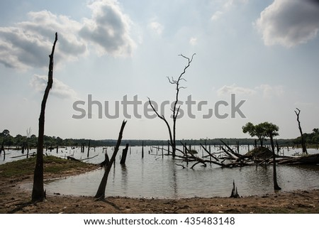 Dead tree sticking out of the water from Lake - stock photo