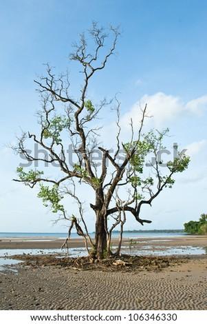 Dead Tree Still Standing on the Beach - stock photo